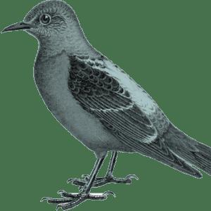 registration-bird