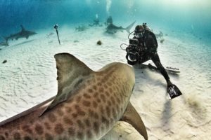 core-swx_shark-week_1