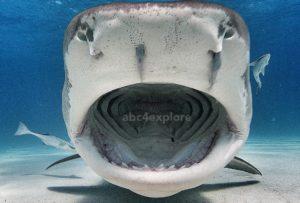 core-swx_shark-week_4